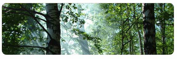 Reiki Courses - a peaceful wood